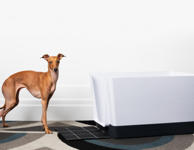 Doggy Bathroom whippet Dog white Tub
