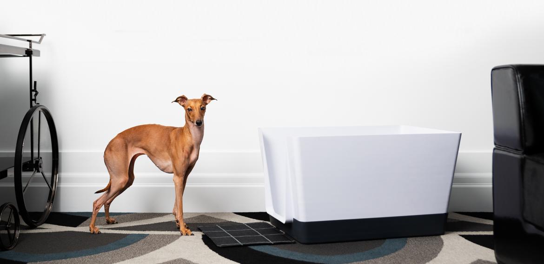 Doggy Bathroom whippet Dog white Tub